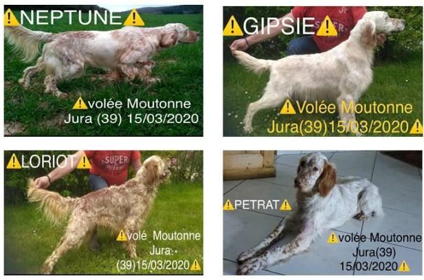 Photo chiens volés