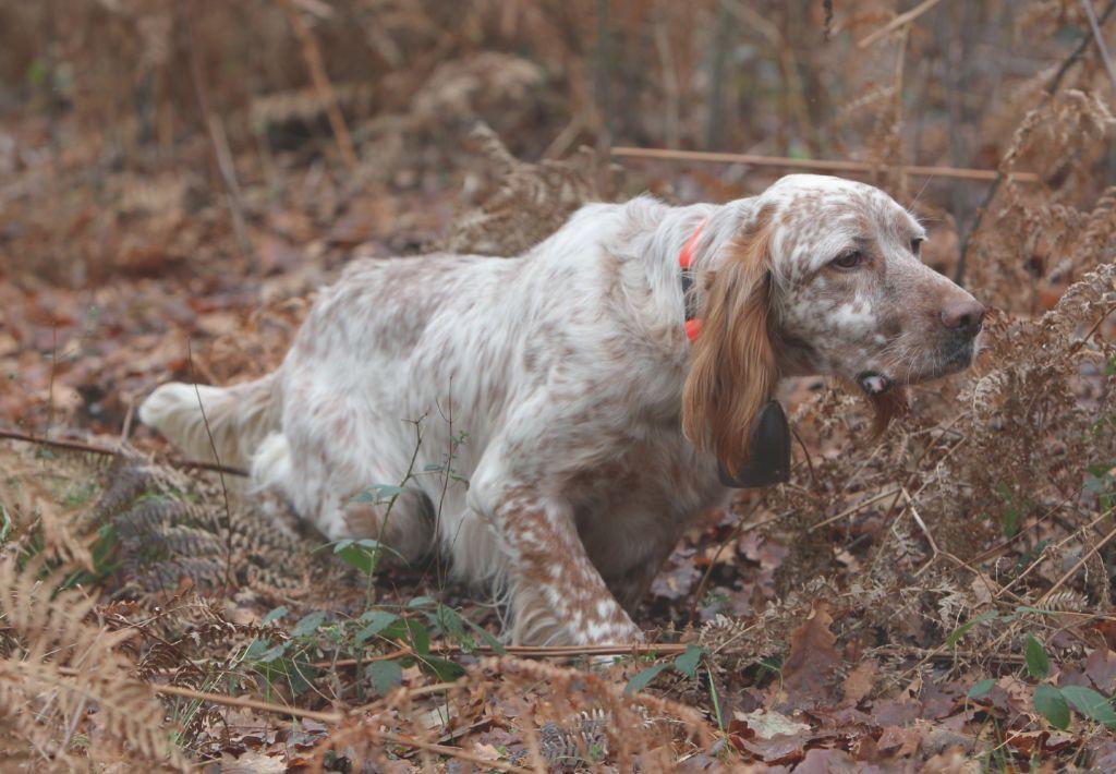 Les modes de chasse - Fédération des Chasseurs du Rhône