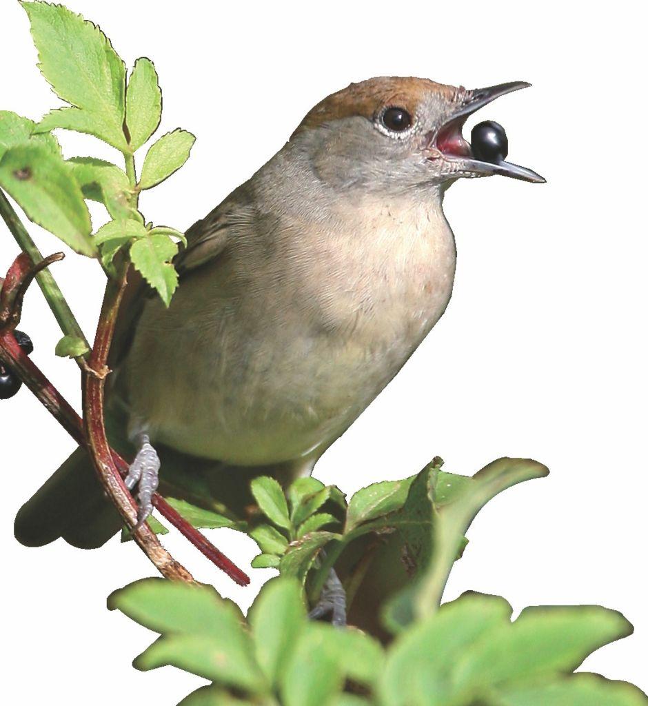 illustration_oiseau